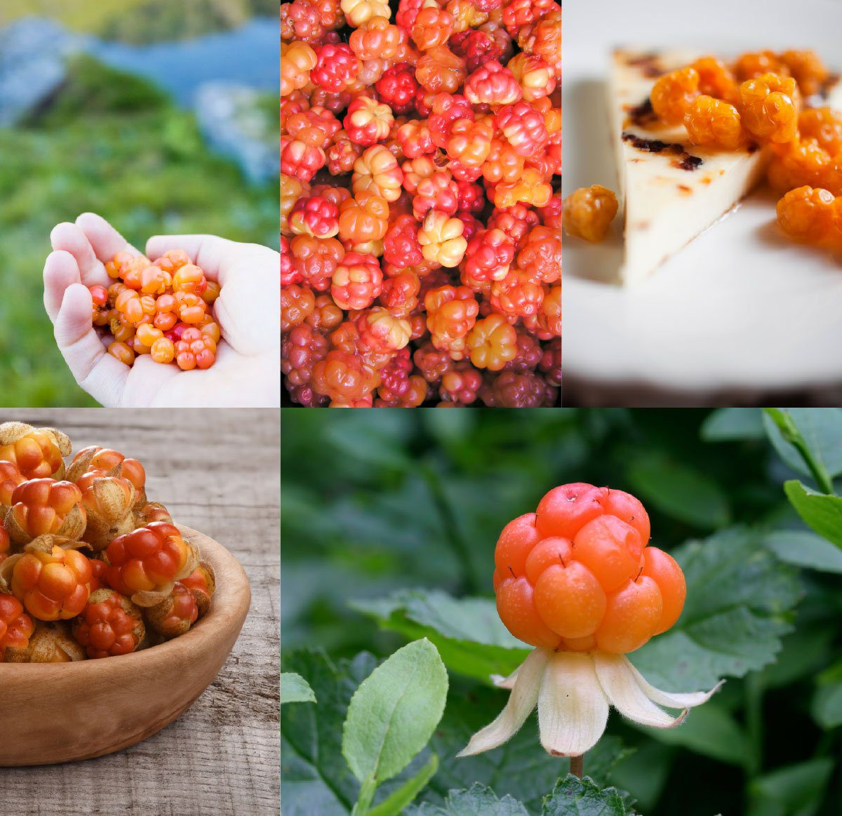 arctic cloudberry the perfect v nordic ingredients in the pursuit beauty
